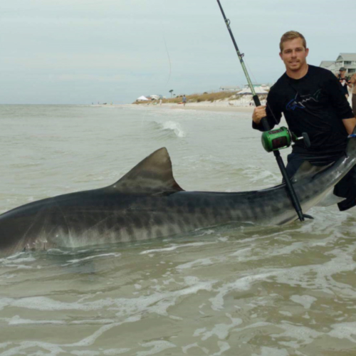 Zach Wolk with an 11 ft 5 inch tiger shark he caught on a Jawbone Hatchet JBX-8655