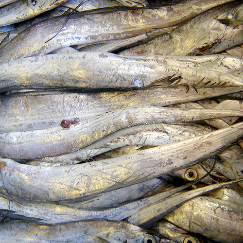 Ribbonfish Frozen Bait