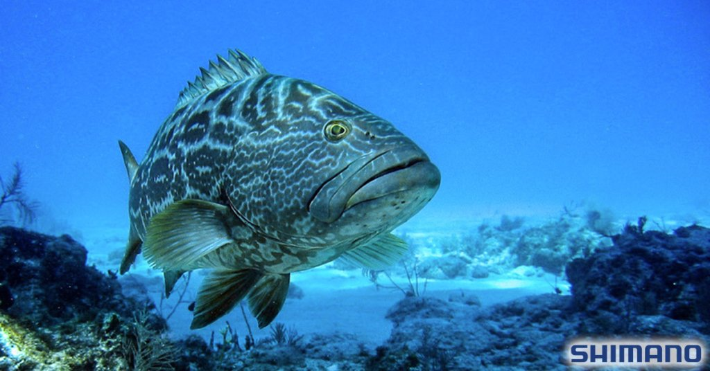 FISHING OFFSHORE FOR GROUPER
